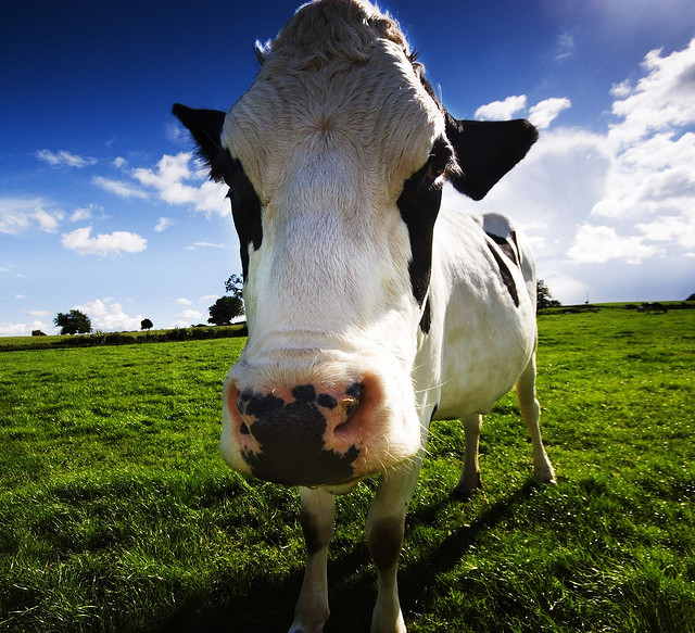 Need help with a philosophy essay- is it right to eat meat?